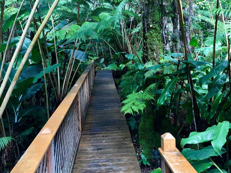 walkway to forest spa at our Lodging Near Volcanoes National Park